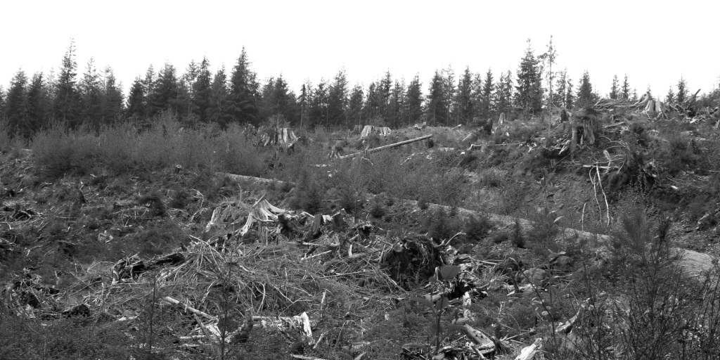 Clear-cut outside of Olympic National Park