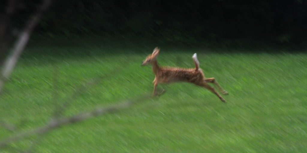 Fawn frolicks in the city