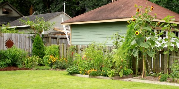 The challenge of summer gardens in the American south