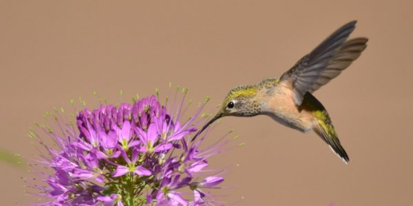 The simple ambitions of hummingbird