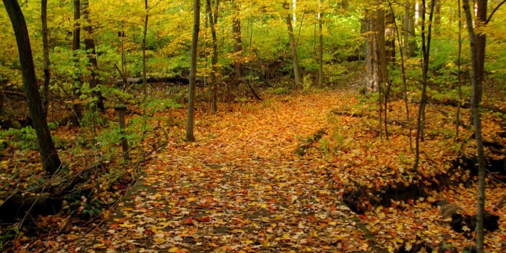 Autumn pathway, Flint Ridge, Glenford, Ohio