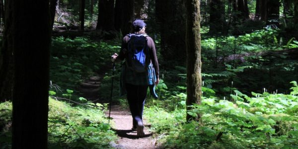 A hike in deep woods