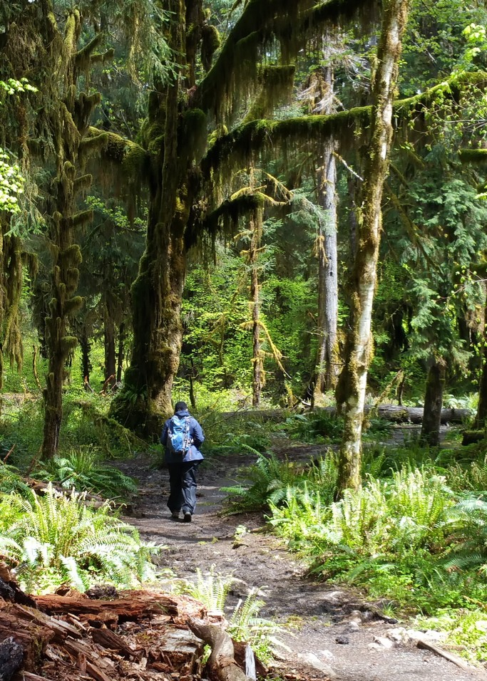 Hiking into the Hoh Rain Forest