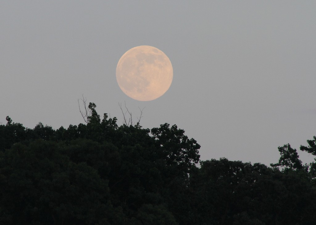 Full moon, Meeman-Shelby Forest State Park